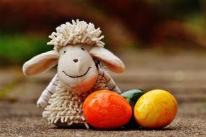 sheep-1272810_1920